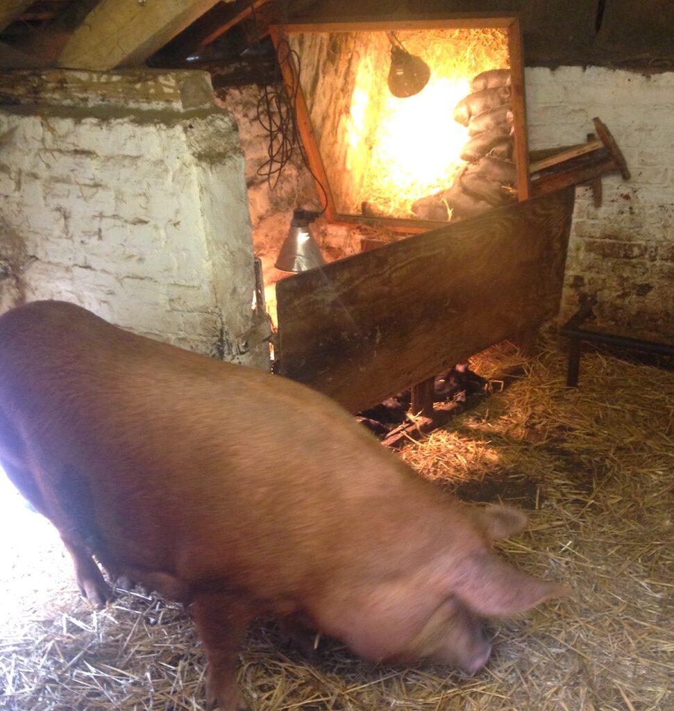 Acton Scott Farm Shropshire