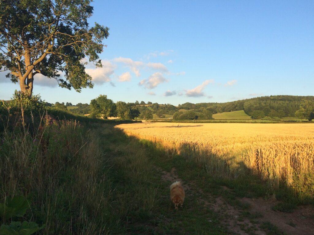 Sutton Coppice Walk