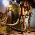Mammoth Shropshire Hills Discovery Centre